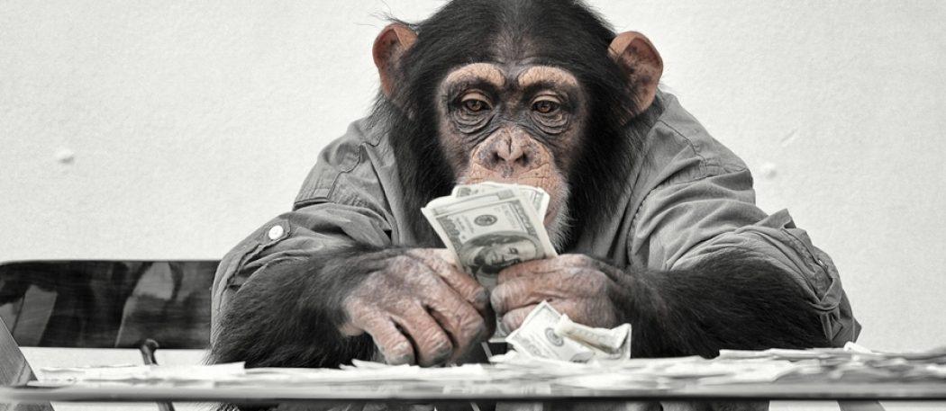 Эффект «сотой обезьяны»: эволюция как она есть