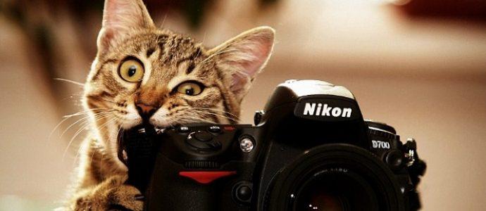Как научиться лучше фотографировать?